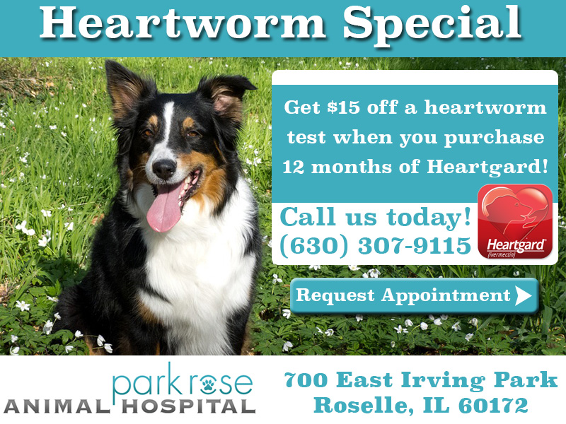 ParkRoseAHHeartwormSpecial3